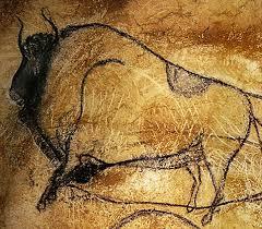 bison major Chauvet